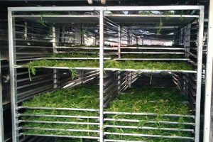 کارخانجات سبزی خشک